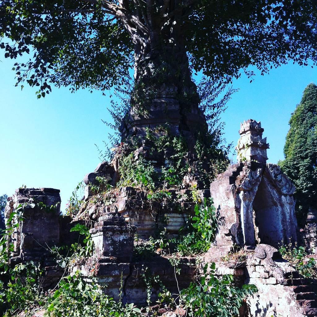 ミャンマー北部 シーポー ブッダツリー