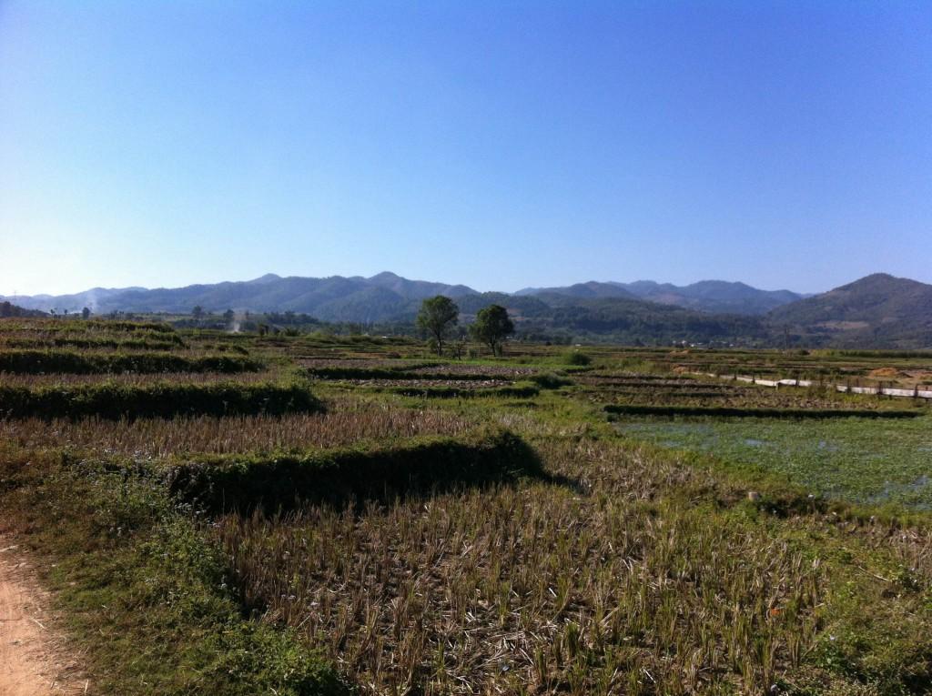ミャンマー北部 シーポー 田舎 田んぼ 自然