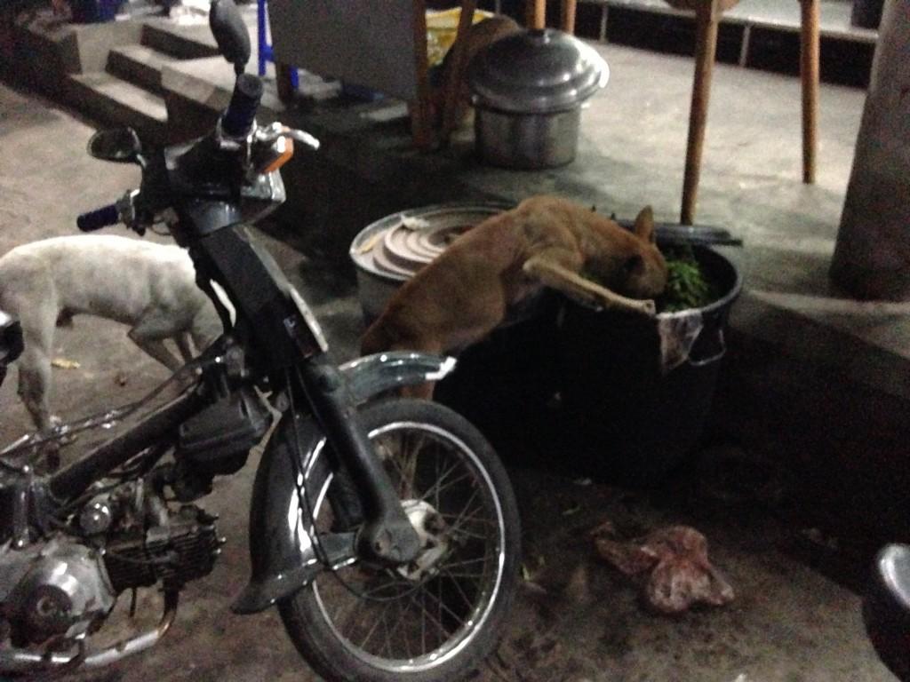 ミャンマー ゴミ 漁る 犬 街の風景