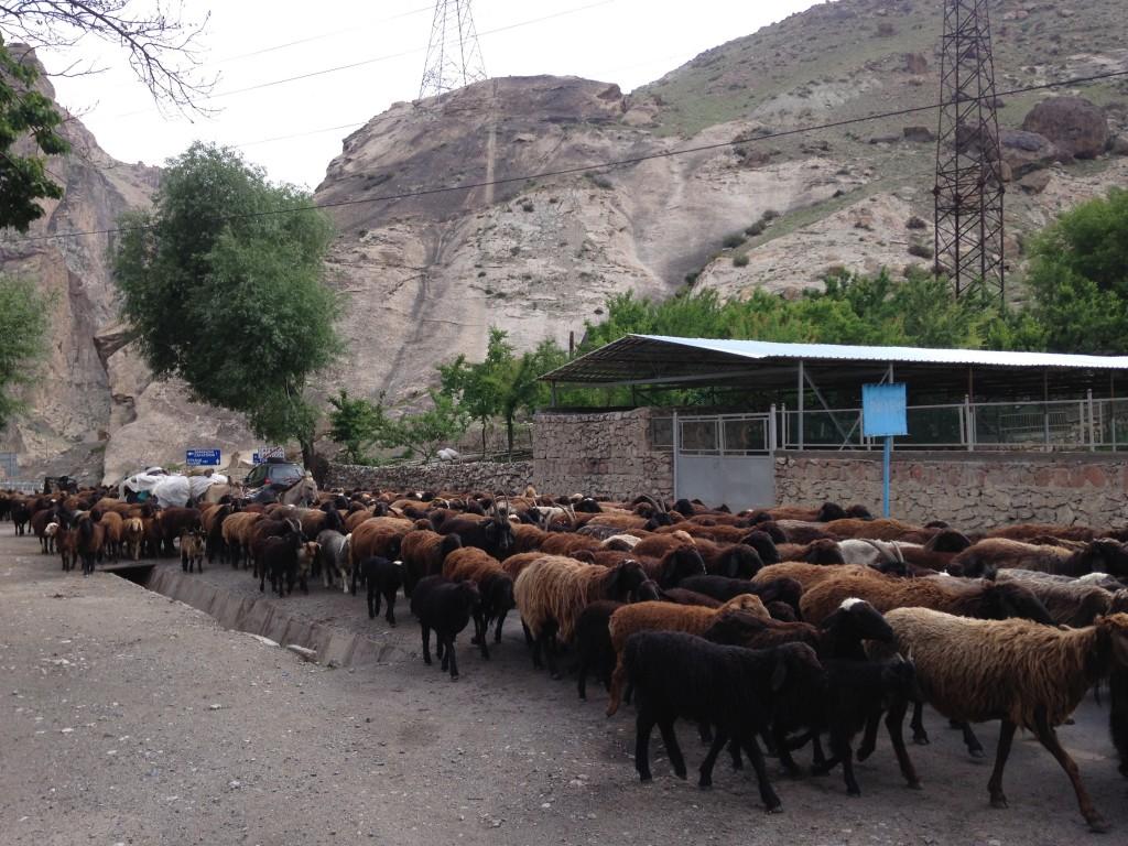 タシュケント ウズベキスタン サルボダ タジキスタン オイベック 国境 陸路 移動 世界一周 旅 ブログ