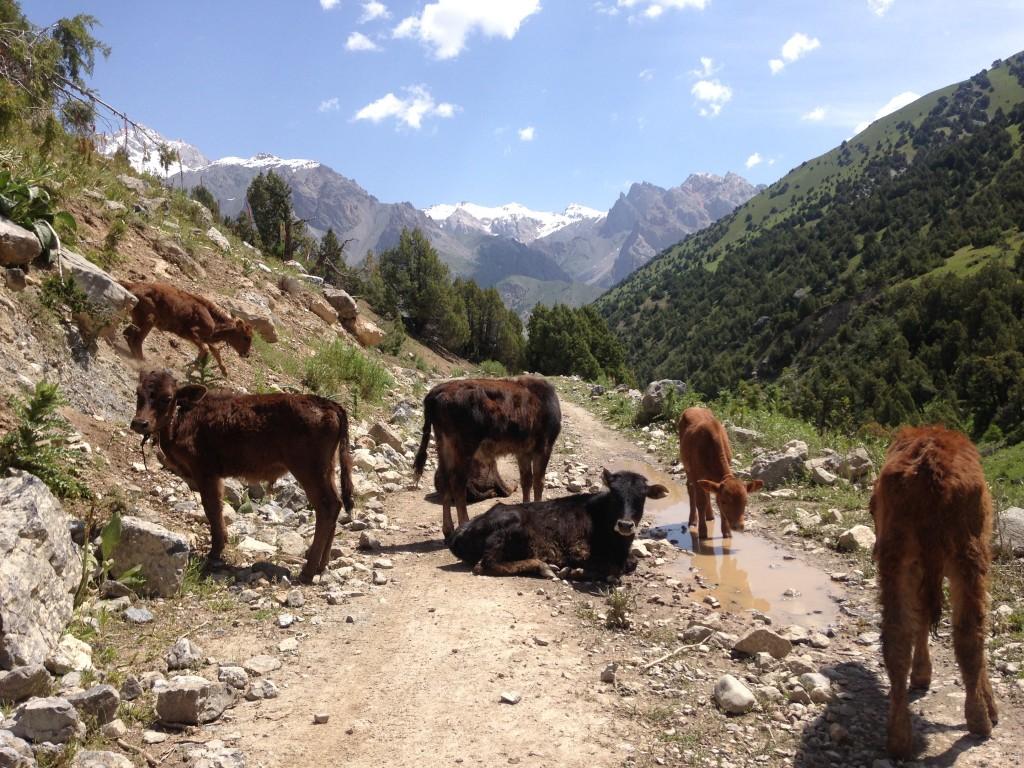 ファンマウンテン タジキスタン サルボダ アラウディン トレッキング 絶景 湖 青い キャンプ 世界一周 旅 ブログ