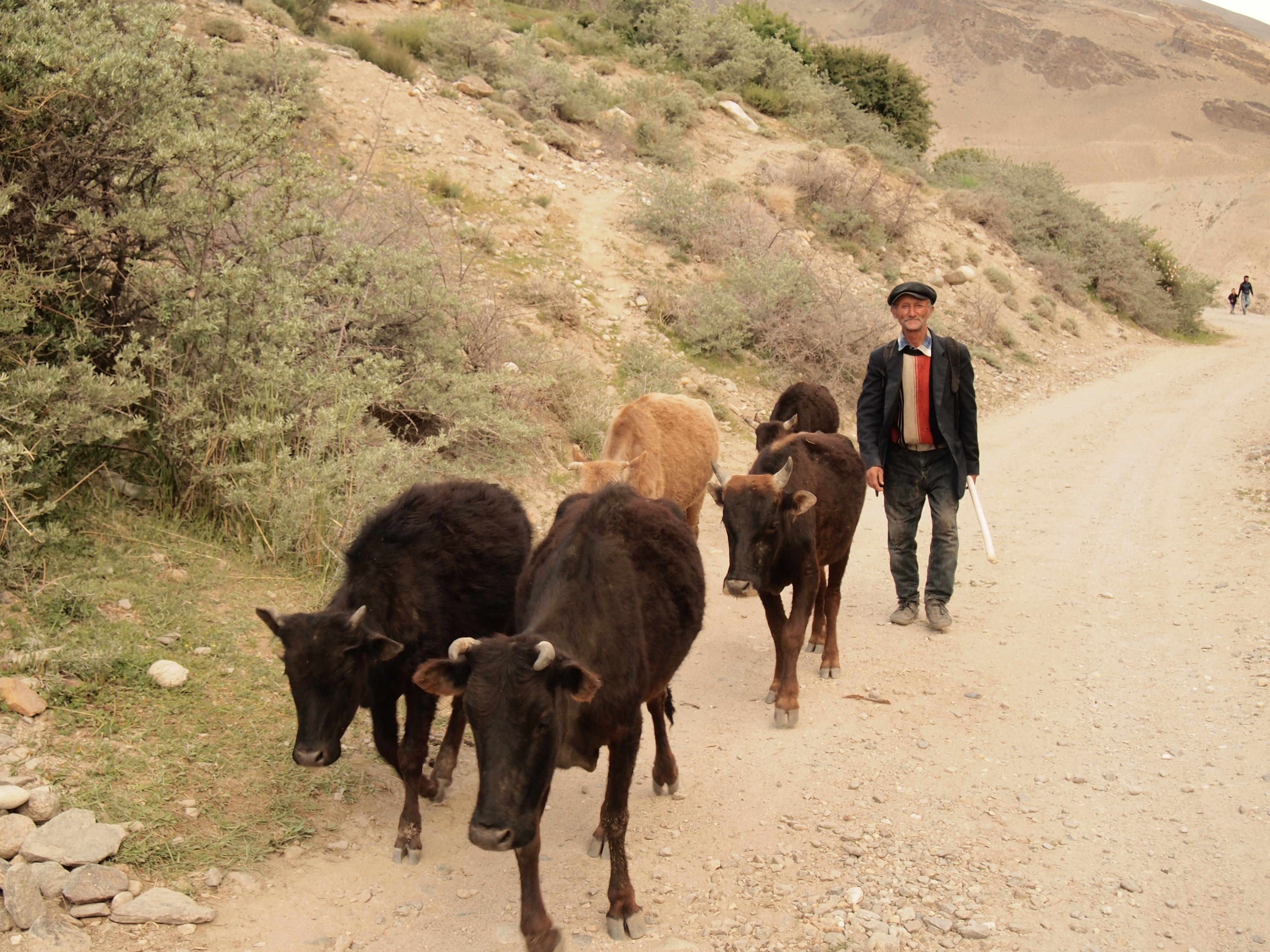 タジキスタン,温泉,ビビファティマ,秘境,ワハーン,パミール,ホームステイ,世界一周,旅,ブログ