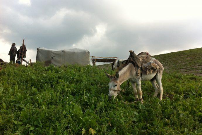 中央アジア キルギス カザルマン