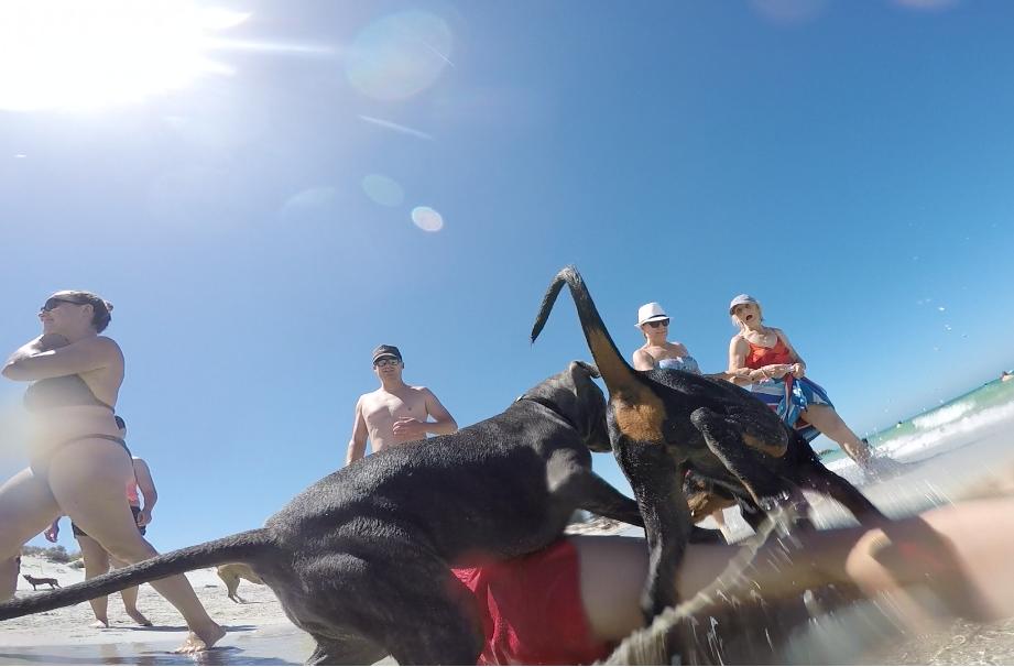オーストラリア パース ワーホリ 海 アジア 日本人 犬