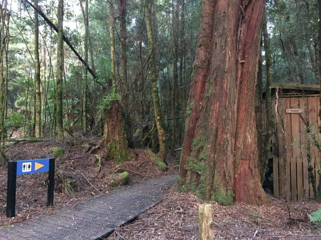 タスマニア キャンプ 野営 テント オーストラリア 世界一周 自然 旅 ブログ